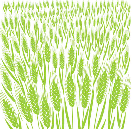 Wheat field. Leaves and ears of cereal. Agriculture straw. Banner background. Green grass meadow. Silhouette vector line. Bread wrapper.