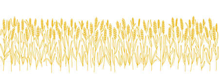 Wheat field. Agriculture cereal harvest. Bread wrapper. Orange dry rye grass. Copy space. Horizontal banner. Hand drawn sketch. Contour vector line.