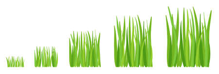Grass growth stages. Lawn mowing. Ripening cut period. Vector infographic. Illustration
