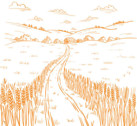 Field road. Rural landscape. Hand drawn sketch. Wheat field track. Countryside village. Cereal harvest. Contour vector line. Illustration