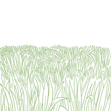 Green grass meadow. High thick lawn growth. Hand drawn sketch. Vector contour line. Copy space.