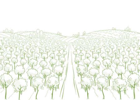 Wine label background. Field road. Vineyard landscape sketch. Grapes plantation. Hand drawn contour line. Copy space. Illustration