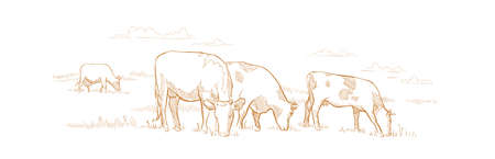 Cows graze in the meadow. Hand drawn sketch. Animal farm. Dairy product. Rural landscape panorama. Milk produce. They eat grass in the field.