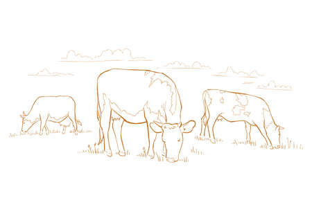 Cows graze in the meadow. Hand drawn sketch. Animal farm. Dairy product. Rural landscape panorama. Milk produce.