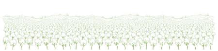 Vineyard landscape sketch. Grapes plantation. Panorama field. Hand drawn line. Wine label. Site header. Long horizontal banner.