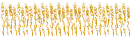 Wheat field. Leaves and Ears of rye. Agriculture straw. Horizontal banner background. Dry yellow grass. Orange contour vector line. Bread wrapper.