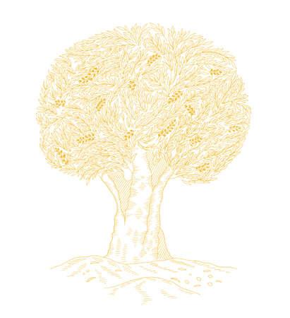 Olive Tree. Foliage. Olive-tree oil. Golden color leaves line contour. Vector Illustration hand-drawn.