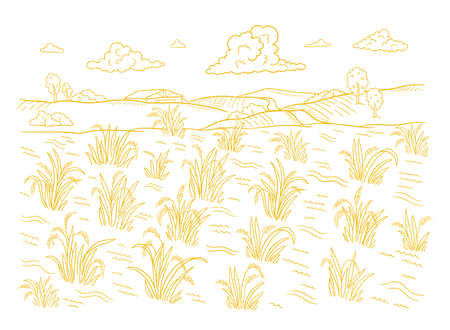 Rice field growth. Agriculture harvest. Cereal grain. Rural countryside landscape. Oryza sativa plant. Hand drawn sketch. Contour line vector.