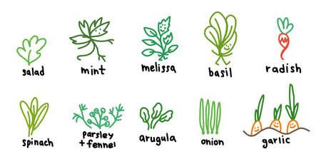 Popular green garden plants. Icon set. Salad and melissa, basil arugula. Hand drawn sketch. Vector cartoon colored illustration. Illustration
