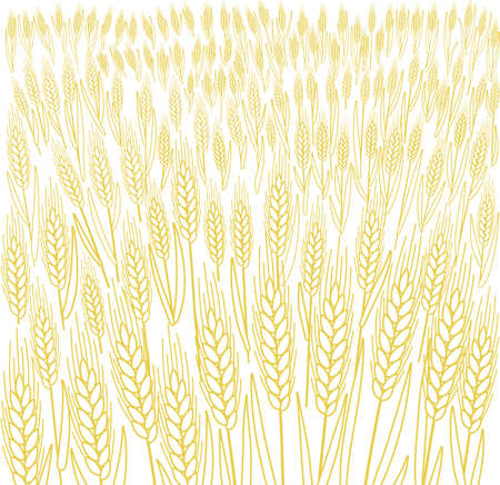 Cereal field. Ears of wheat. Agriculture straw. Dry yellow grass meadow. Orange contour vector line. Bread wrapper background.