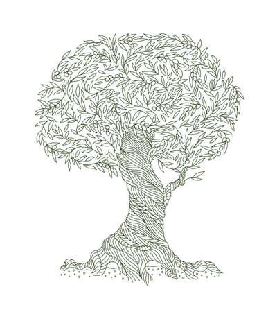 Olive Tree. Foliage. Olive-tree oil. Leaves line contour. Vector Illustration. Illustration