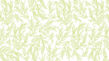 Olive Tree branches pattern. Olive-tree oil wrapper background. Light green color. Foliage leaves engraved vector line contour. Banque d'images