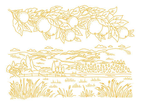 Rural landscape. Branch of an orange tree. Leaves and fruits. Garden trees. Village field. Hand drawn sketch. Countryside. Contour vector line.