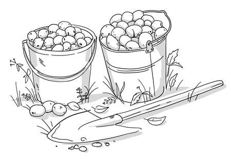 Two buckets of potatoes and a shovel. Autumn vegetable harvest. Hand drawn black and white line vector sketch. Agriculture plant production.