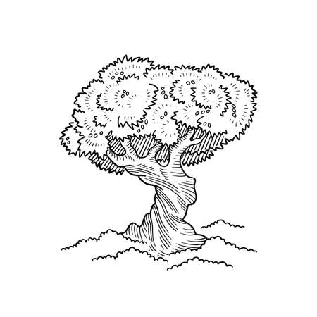 Olive Tree. Lush crown and thick twisted tree trunk. Foliage. Hand drawn sketch. Black and white outline line engraved contour vector.