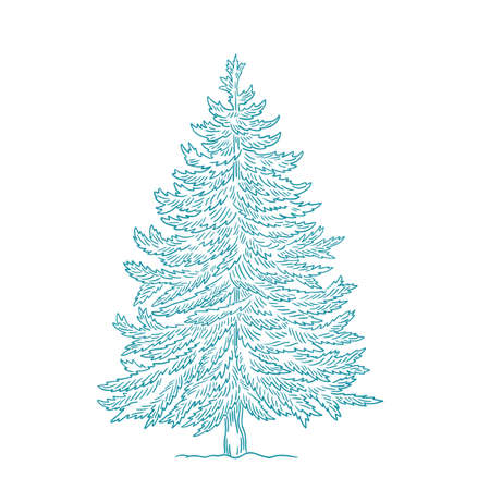 Christmas tree. Conifer spruce. New year fir-tree postcard background. Hand drawn contour vector line sketch.