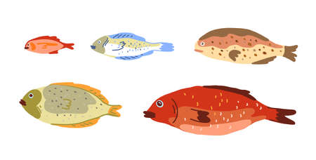 Fish of different sizes set. Growth stages development. Hand drawn sketch. Vector.