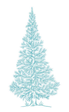 Christmas blue tree. Conifer fluffy spruce. New year fir-tree postcard. Hand drawn contour vector line sketch.