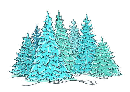 Christmas tree forest sketch. Blue conifer spruce. New year fir-tree postcard. Hand drawn vector.
