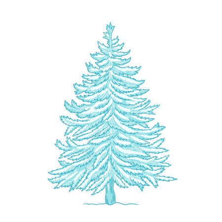 Christmas tree. Conifer. Blue spruce. Frosty winter snow. New year fir-tree postcard background. Hand drawn contour vector sketch.