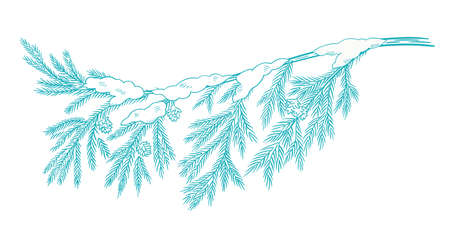 Branch christmas tree with snow. Conifer spruce. Frosty winter. New year fir-tree postcard background clipart. Hand drawn contour vector sketch. Fir cones.