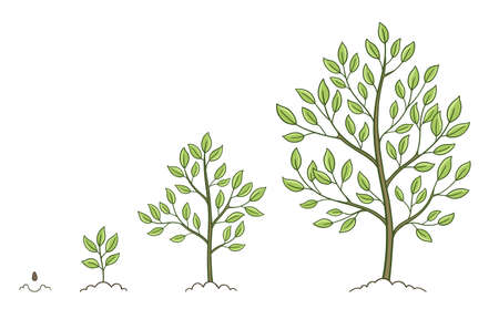 Tree growth stages set. Plant development phases. Animation progression. Vector sketch infographic. The life cycle.