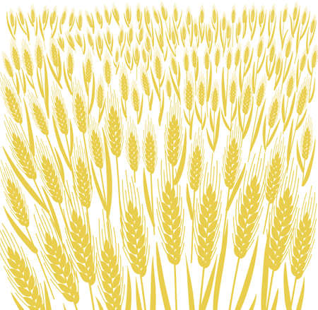Cereal field. Leaves and ears of wheat. Agriculture grain. Silhouette vector. Bread wrapper background. Vettoriali