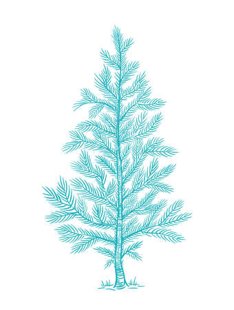 Little fluffy blue Christmas tree. Branch with snow. Conifer or spruce. New year fir-tree. Hand drawn contour vector line sketch. Fir with needle. Vettoriali