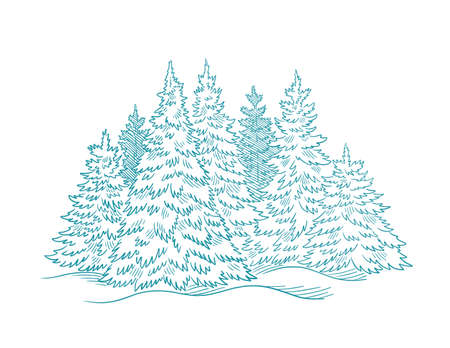 Fir tree forest sketch. Blue conifer spruce. New year fir-tree postcard. Hand drawn vector. Contour line.  イラスト・ベクター素材