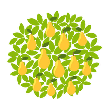 Yellow pear fruits tree. Against the round background of the crown and leaves. Orchard garden harvest. Vector.
