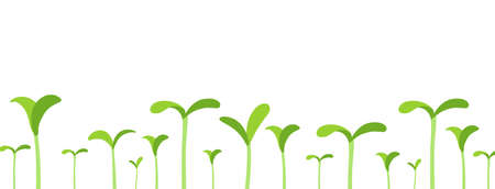 Agricultural seedlings field. Growing young plant shoots. Crops began to sprout. Spring season. Vector.