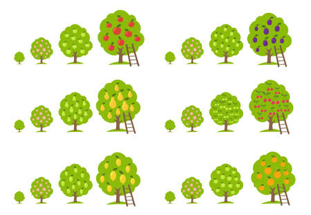 Growth stages different fruit trees set. Lemon and orange apple, cherry pear and plum. Orchard garden harvest. Vector infographic Illustration. Animation progression.