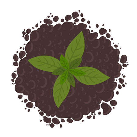 Young plant leaves on the pile of soil ground. Top view. Soil for growing and sprout seedlings. Vector illustration.