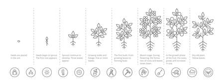 Plant growth stages infographic. Growing period steps. Harvest animation progression. Fertilization phase. Cycle of life. Black line contour outline. Vector icon set.
