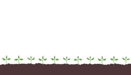 Seedlings germination on the field. Growing young plant. Agricultural shoots. Began to sprout. Spring season soil. Vector. Copy space.