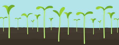 Agricultural seedlings field. Growing young plant shoots. Crops seed began to sprout. Spring season. Vector. Horizontal banner.