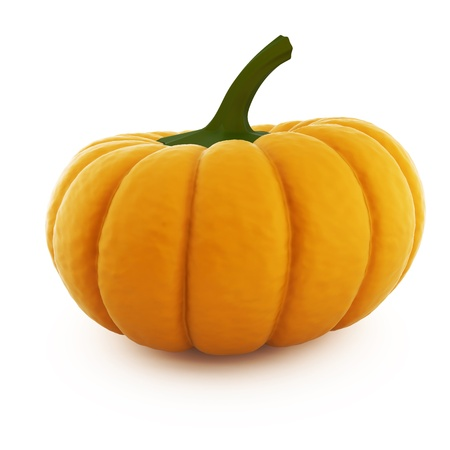 pumpkin on a white background photo