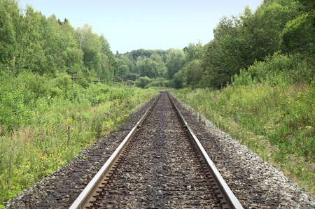 Railroad tracks passing through the forest photo