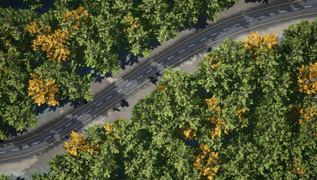 Top view of the road through a thick deciduous forest. 3d rendering.