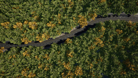 Top view of a rural road through the forest. 3d rendering.