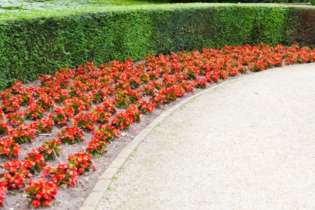 Red Flowers and a footpath. Archivio Fotografico