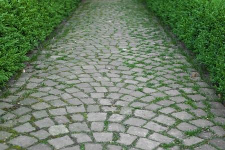 Brick pattern sidewalk through the garden