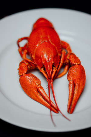 boiled crayfish on a white plate on a black background