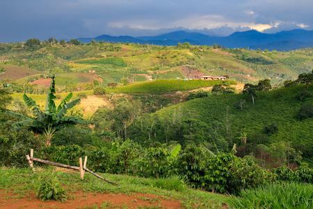 コロンビアの風景、コロンビア、ラテン アメリカ、ヤシの木とコロンビアのコーヒーの木の緑の山々 写真素材