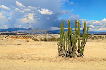 grote cactussen in rode woestijn, Tatacoa woestijn, colombia, latijns amerika, wolken en zand, rood zand in de woestijn Stockfoto