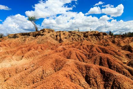 latin america: big cactuses in red desert, tatacoa desert, columbia, latin america, clouds and sand, red sand in desert
