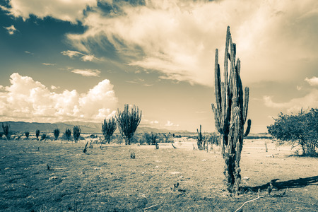 huila: big cactuses in red desert, tatacoa desert, columbia, latin america, clouds and sand, red sand in desert