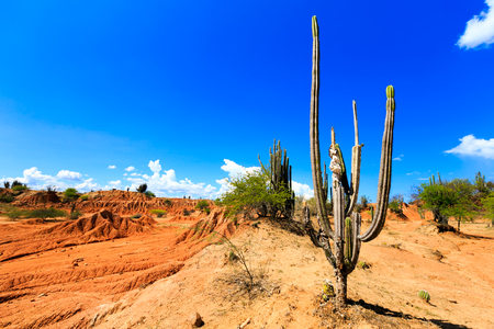 cactus: big cactuses in red desert, tatacoa desert, columbia, latin america, clouds and sand, red sand in desert