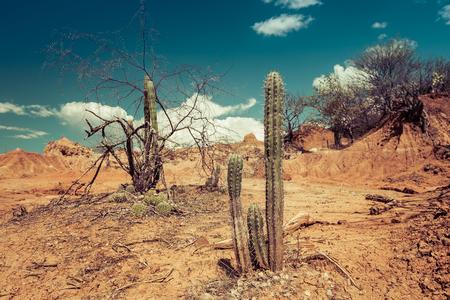 desert sand: big cactuses in red desert, tatacoa desert, columbia, latin america, clouds and sand, red sand in desert
