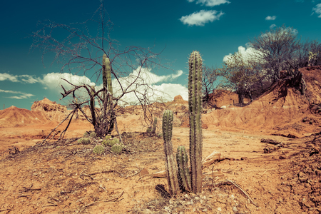 desierto: grandes cactus en desierto rojo, el desierto de la Tatacoa, Colombia, Am�rica Latina, las nubes y la arena, arena roja en el desierto Foto de archivo